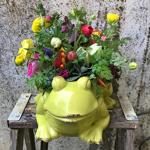My Funny Flower Frog