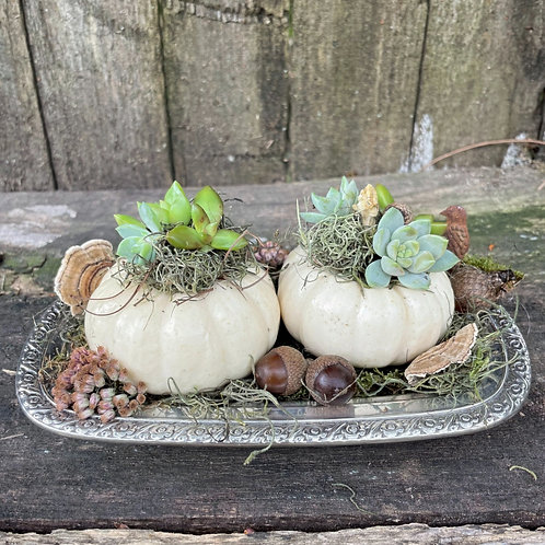 Pumpkins on a Butter Tray