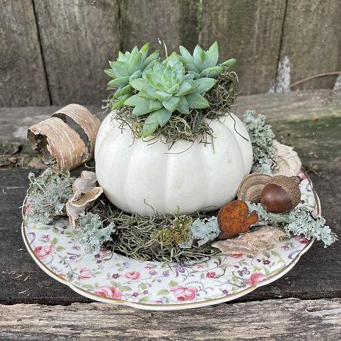 Pumpkin on a Plate