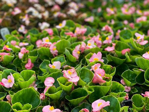 six-pack-summer-flowers-5.jpg