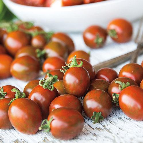 Tomato, Chocolate Sprinkles 4.5 square pot
