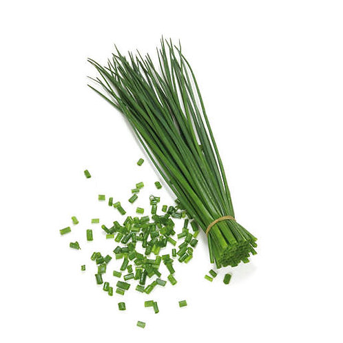Herb, Chives (large leaf) 3.25 in pot