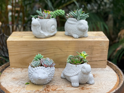Succulent Combo Cement Animal - Small