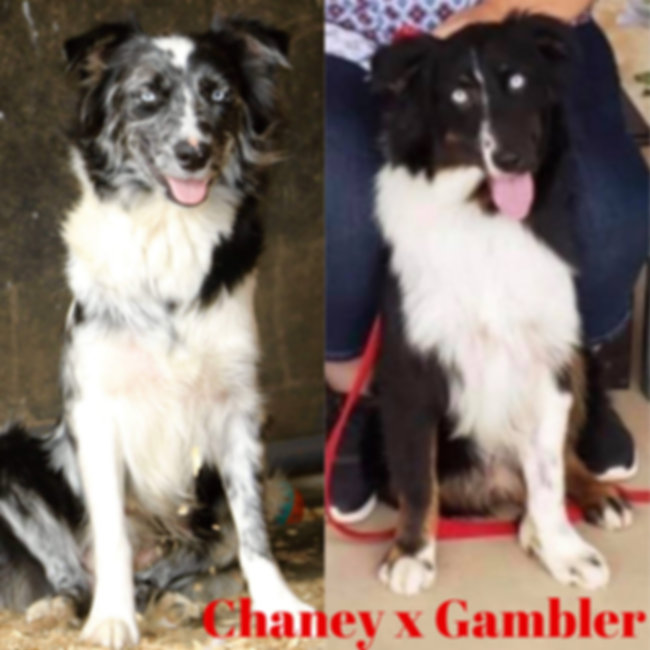 Chaney x Gambler 01.jpg