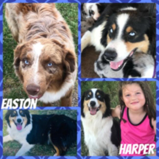 Harper x Easton 01.jpg
