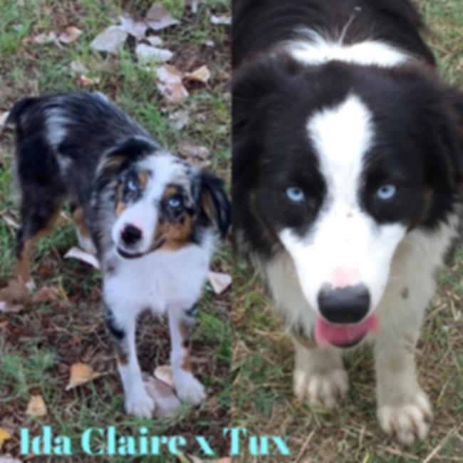 Ida Claire x Tux 01.jpg