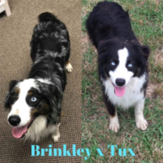 Brinkley x Tux 01.jpg