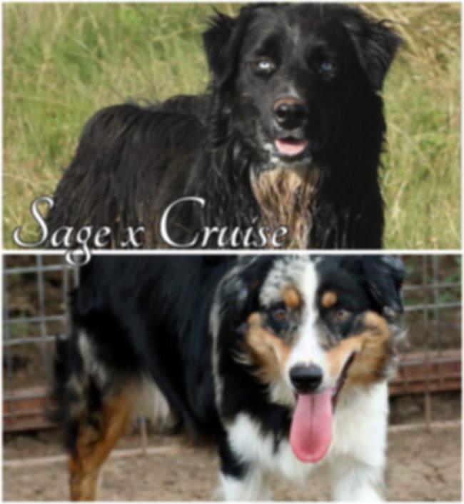 Sage x Cruise 02.JPG