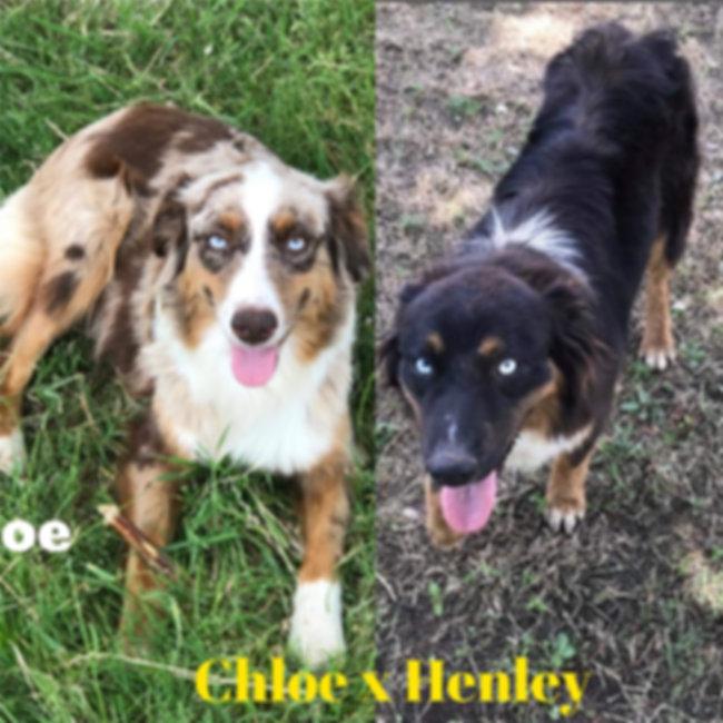 Chloe x Henley 01.jpg