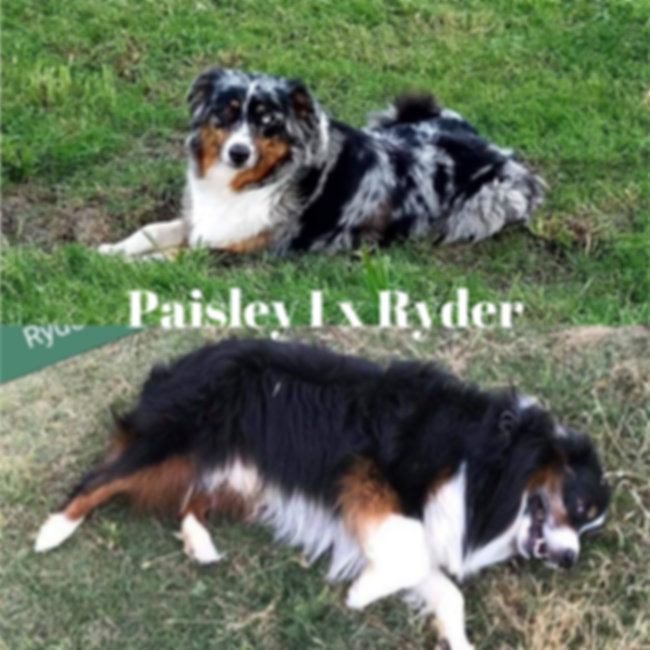 Paisley I x Ryder 01.jpg