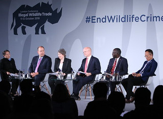 Stopping the Selling: Examining the Shortfalls of the Fight against the Illicit Ivory Trade