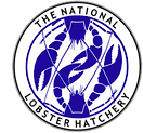 NLH-adobe-logo-file-jpeg_edited.png