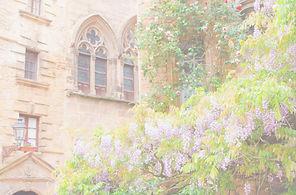 Flower%252520Plants_edited_edited_edited