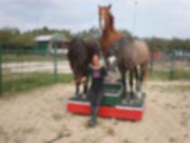 austin red horse ranch.jpg