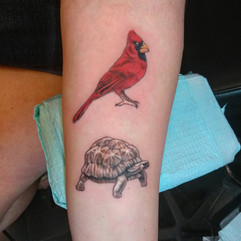 Tortise and Cardinal