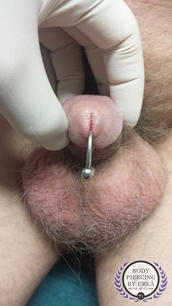 Prince Albert Piercing (PA) Front View