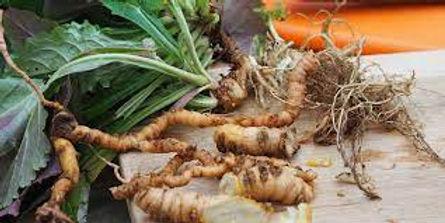 Jahreszeiten-Gartenführung im TCM-Arzneipflanzen-Garten: Wurzelarzneien