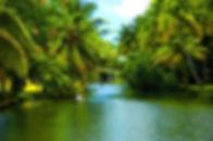 Back_Water_Of_kerala-Soul_of_kerala.jpg