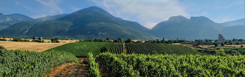 Argyriou Winery vineyards.jpg
