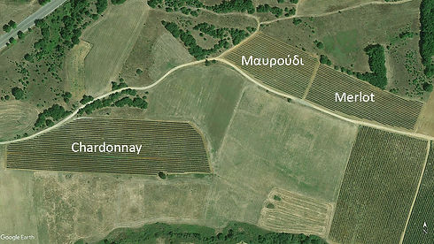 Argyriou Wineyards 720.jpg