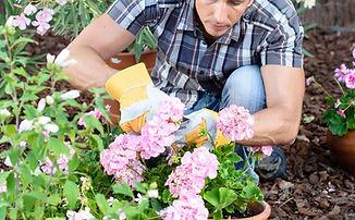 A man planting flowers