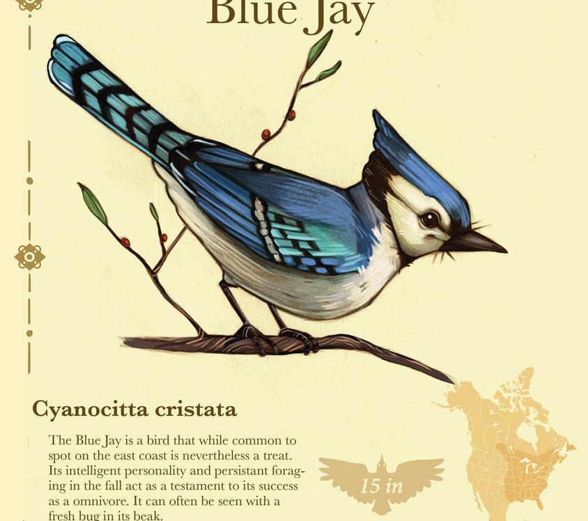 Birder pdf4.jpg