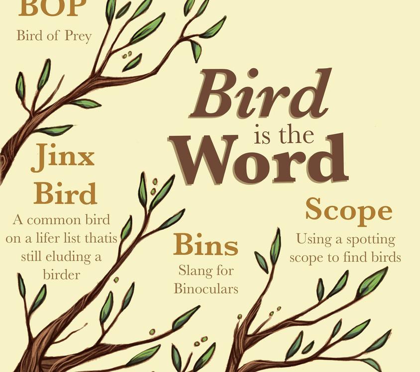 Birder pdf18.jpg