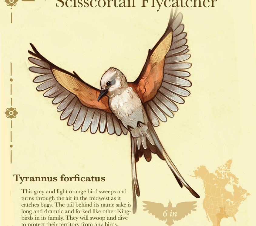 Birder pdf14.jpg