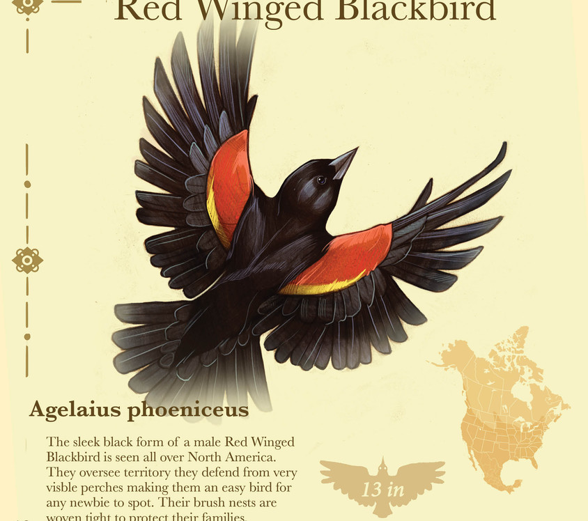 Birder pdf10.jpg