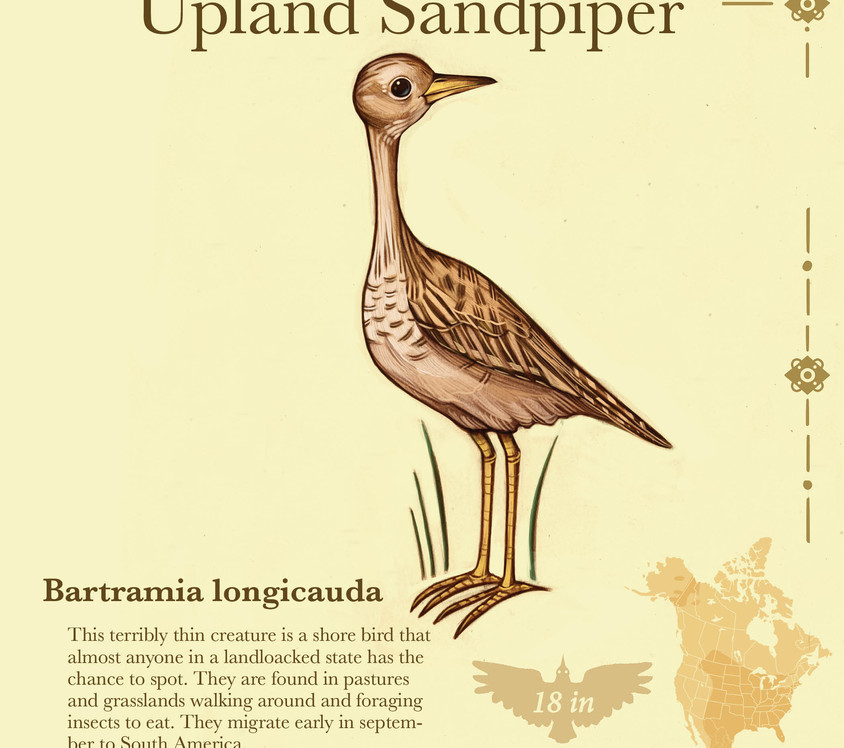 Birder pdf17.jpg