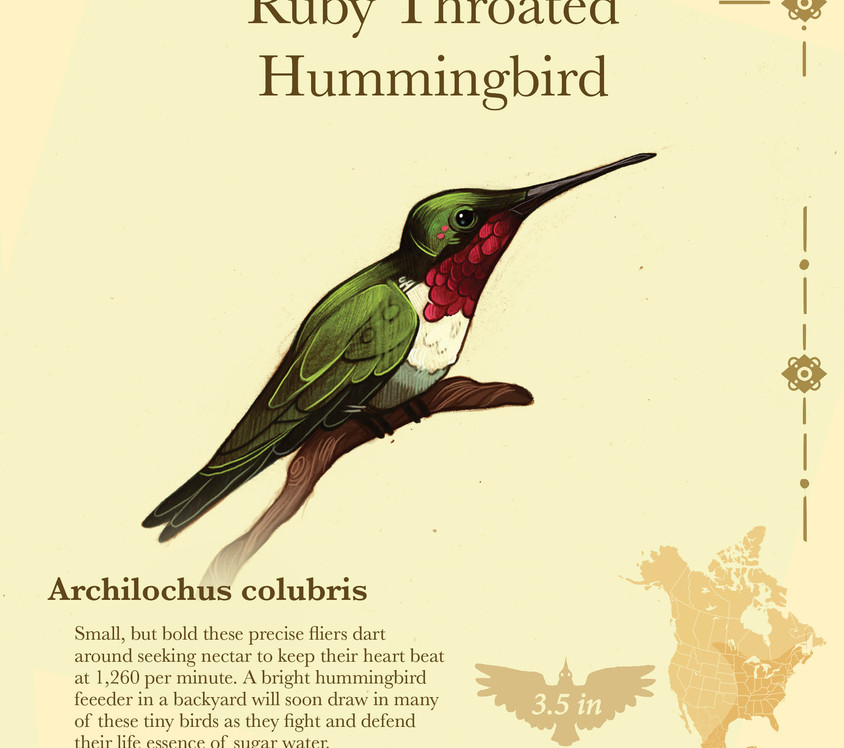 Birder pdf15.jpg