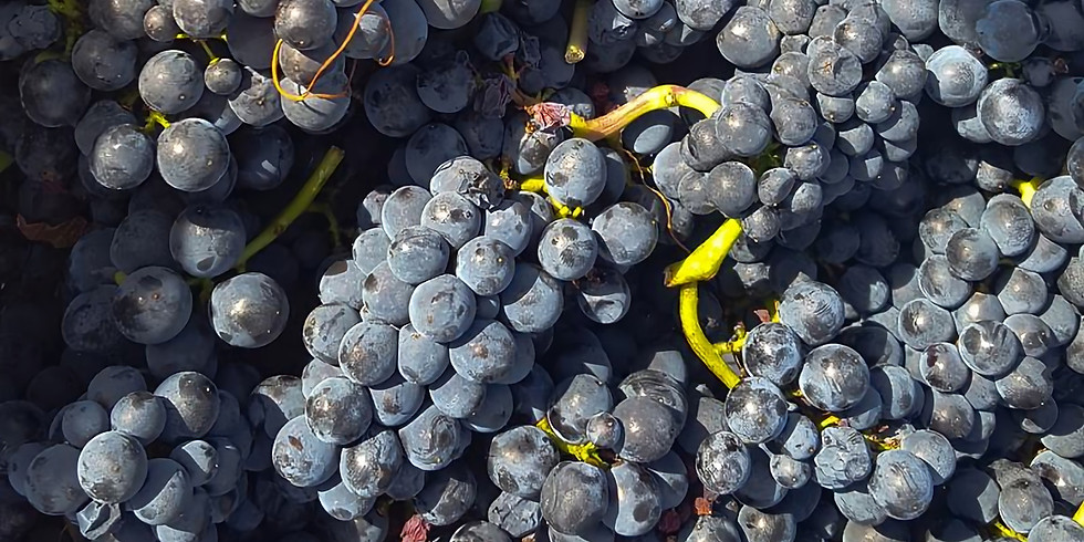Masterclass: The role of stems in red Burgundy