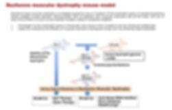 Rare hereditary disease animal models_2.