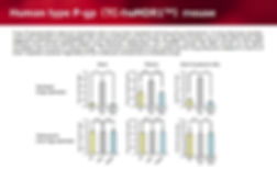 Human type P-gp(TC-huMDR1TM)mouse_1.jpg