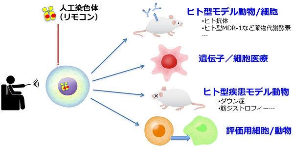 人工染色体をリモコンとして様々な用途に.jpg