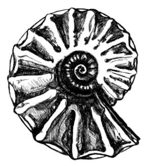 amonit-vs-3_edited_edited_edited.png