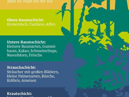 Der tropische Regenwald als Ökosystem