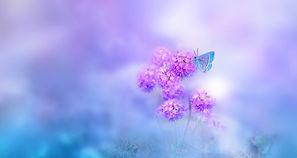butterfly-4401883_1280.jpg