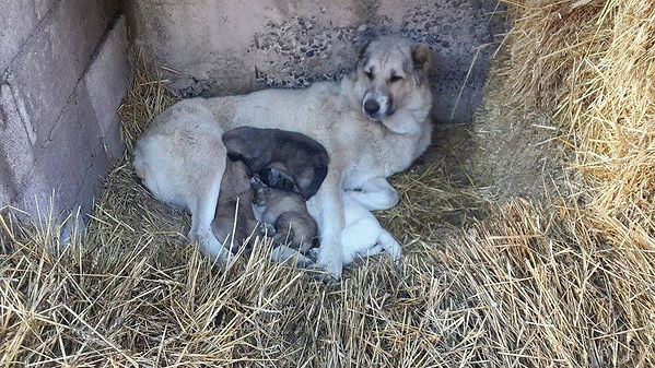 haykaz-pups-khechoyan.jpg