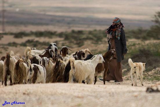 canaan-n-livestock.jpg