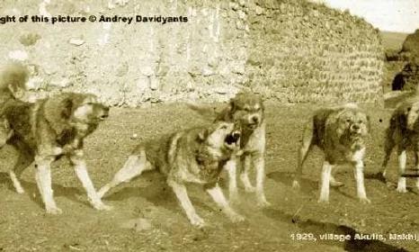 Armenian gamprs in history