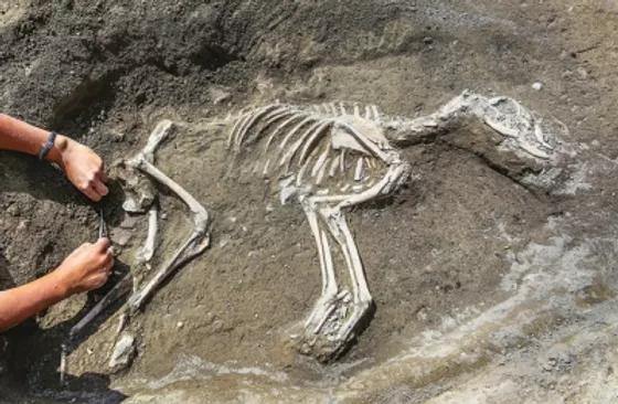 3000-yr-old-gampr.webp