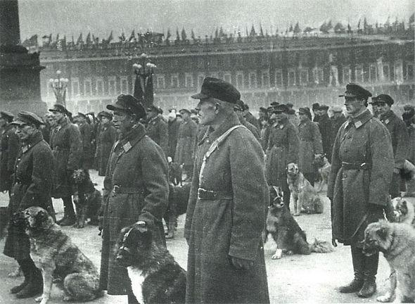 leningrad-old-type-dogs-1932.jpg