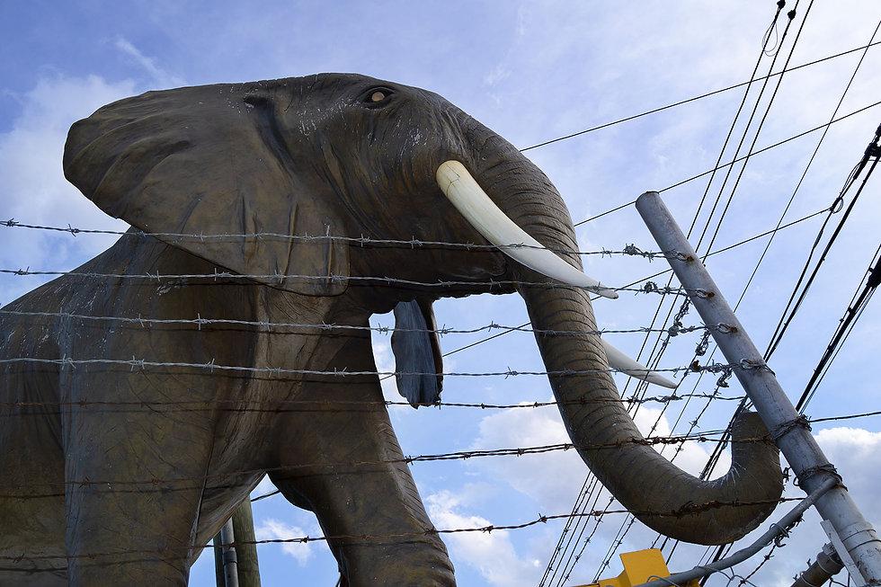 rfudala_elephant.jpg