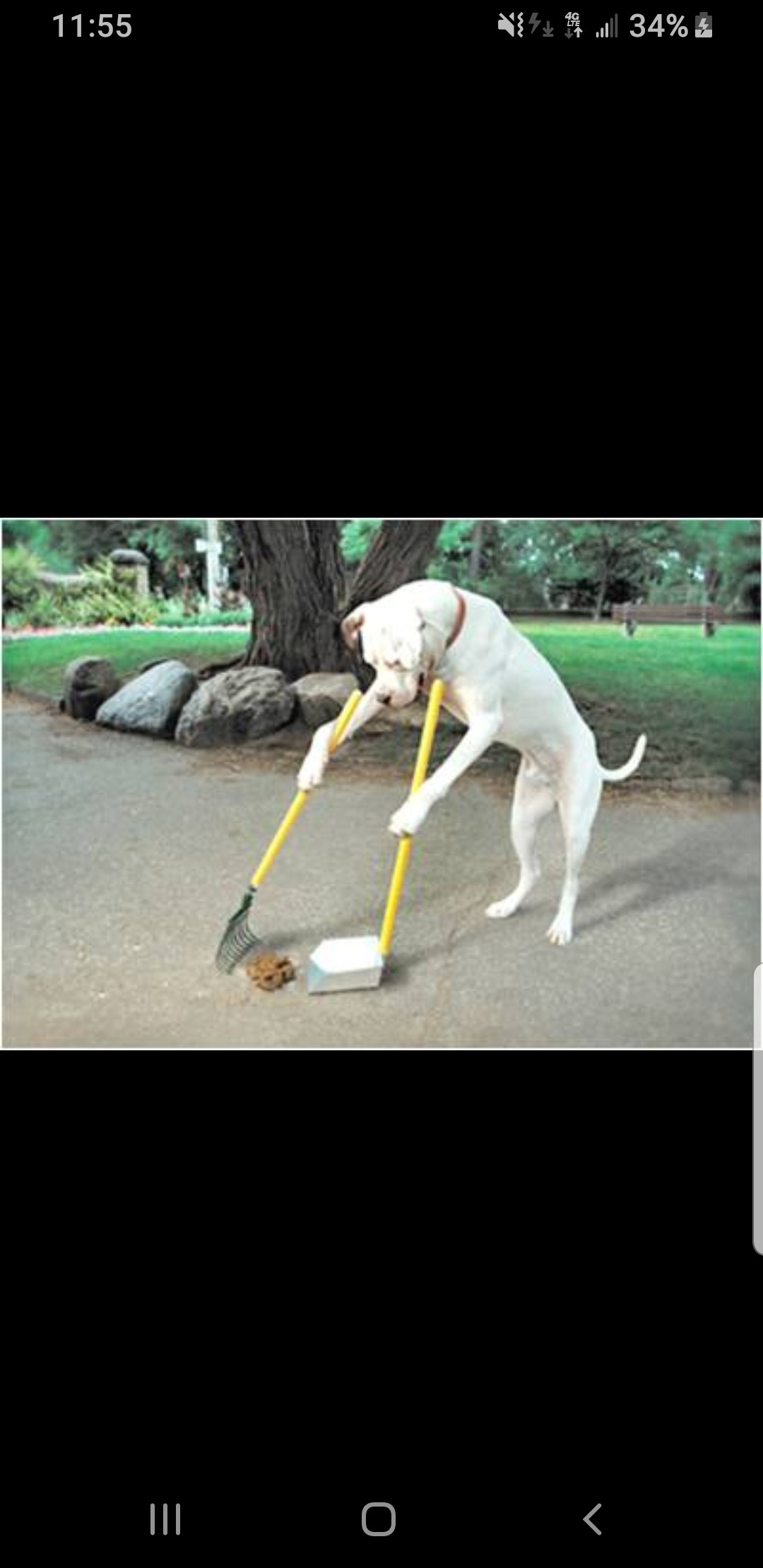Animal Waste Management