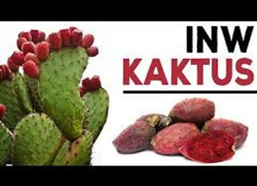 Kaktus (Inawera)
