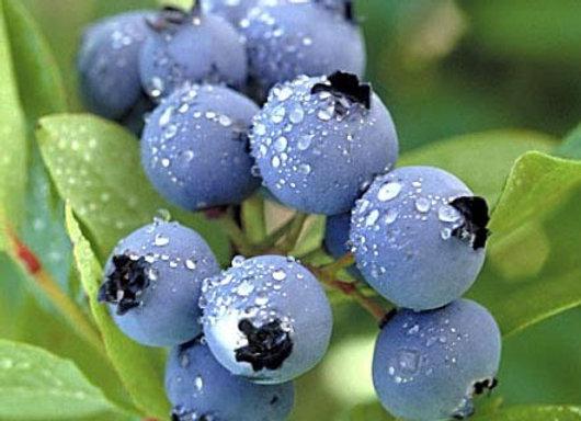 Blueberry Wild (arandano silvestre)