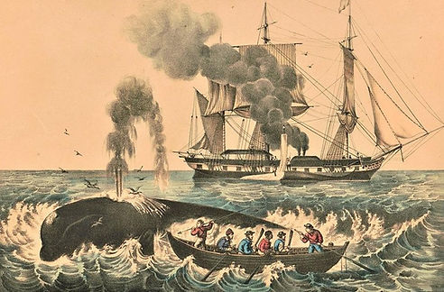 This lithograph dated between 1856 and 1907 depicts a right whale being hunted.jpg