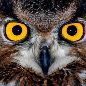 Yunan Mitolojisi'nde Kuşlar : Baykuş ve Karga
