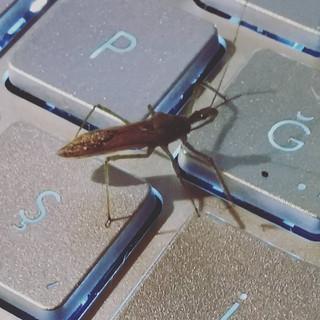 Evimde bir garip böcek...